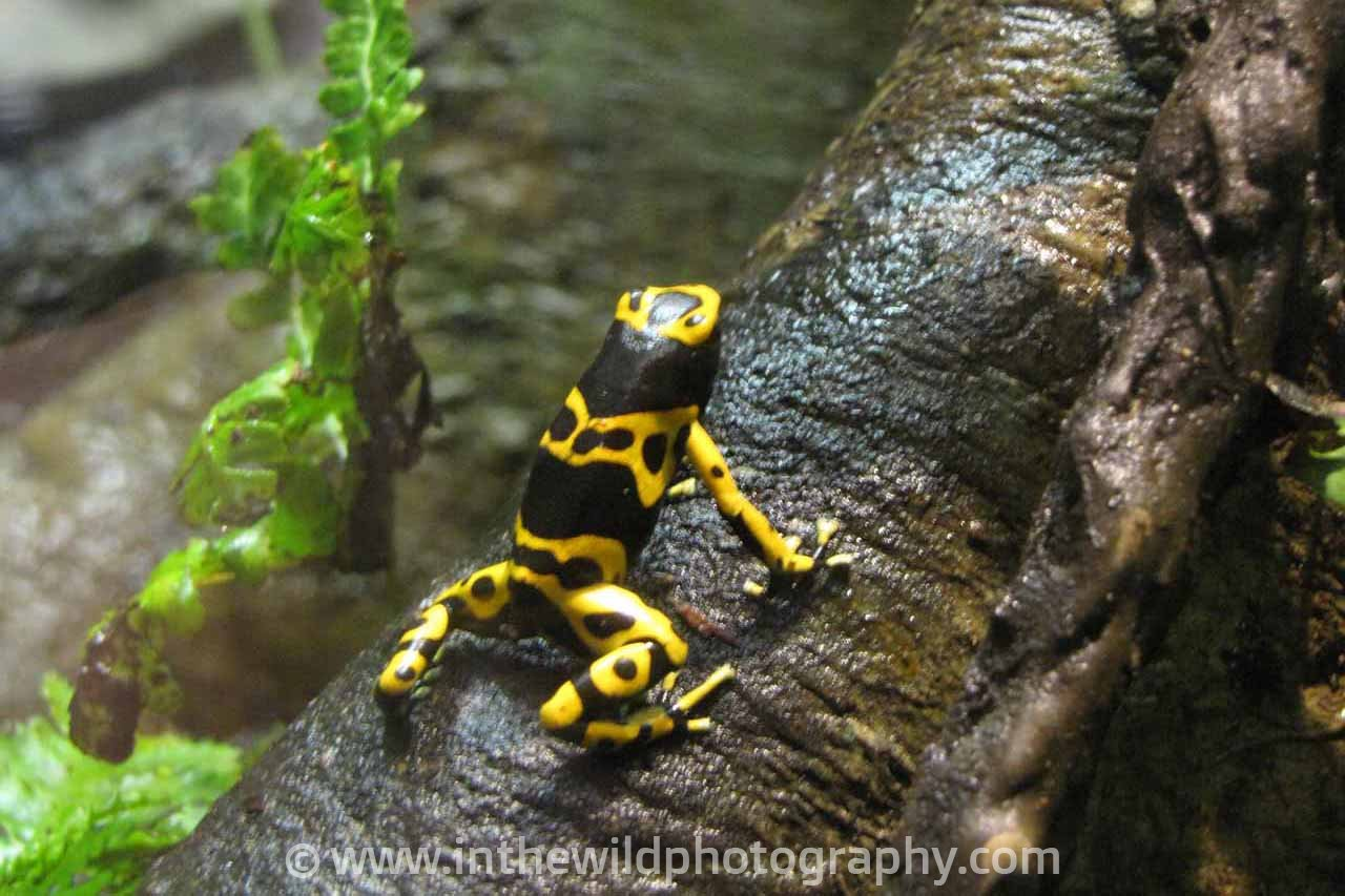 Amphibians Amp Reptiles In The Wild Photography